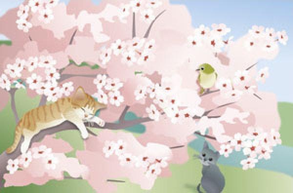 画像1: ポストカード<桜> (1)